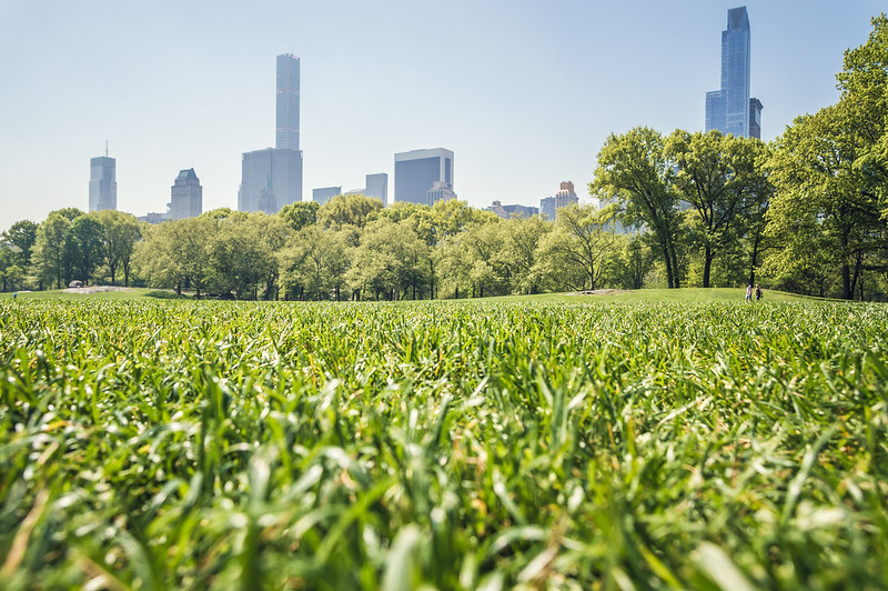 Central Park : Perfect Grass