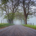 Sparks Lane Foggy Morning, Great Smoky Mountains, Cades Cove [Explored] by jason_frye