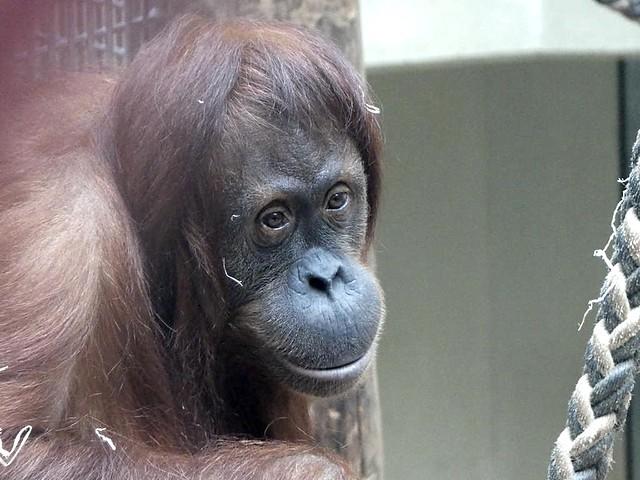 Mama Sari, Zoo Heidelberg