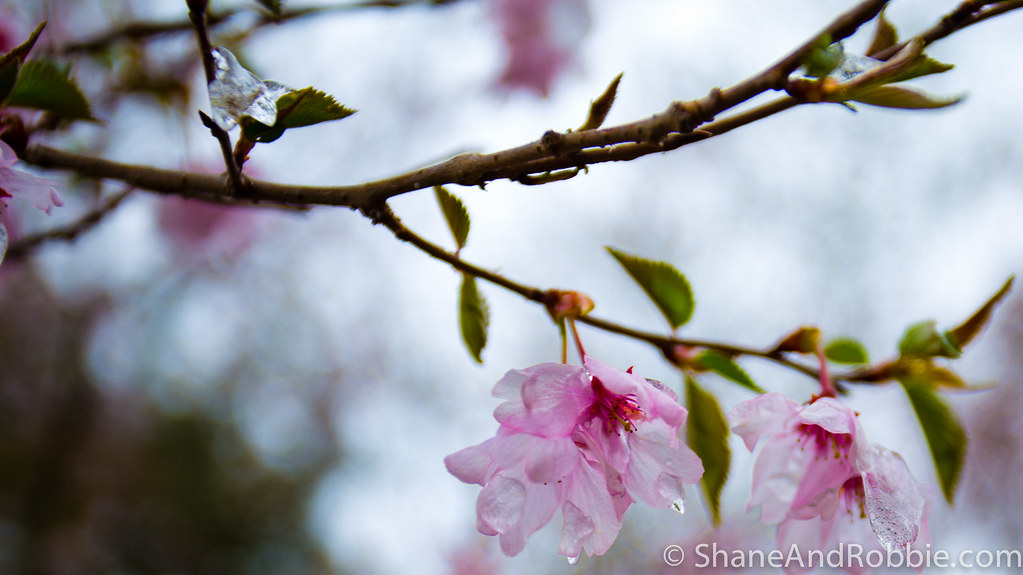 2015-04-09-20150409(Canon EOS 6D)-00015