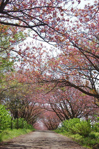 ★秋元牧場の春★