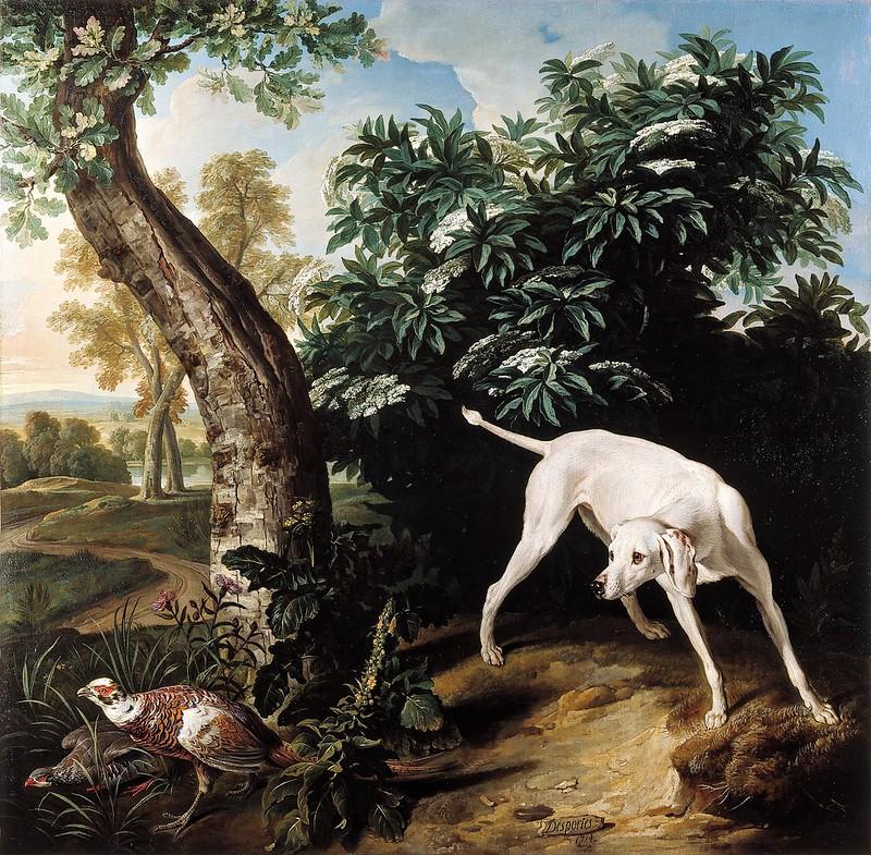 Alexandre-François Desportes - Chienne blanche devant un buisson de sureau (1714)