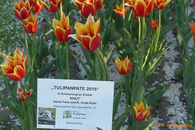 Britzer Garten Tulipan 06.05.2015  82