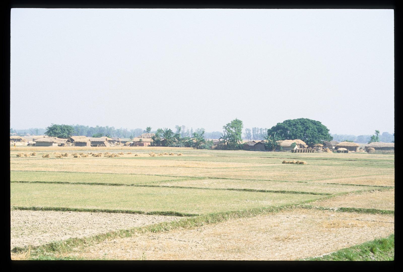 Voyager en Inde à vélo - Le temps des moissons