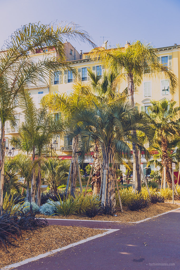 Palm trees along the streets of Nice