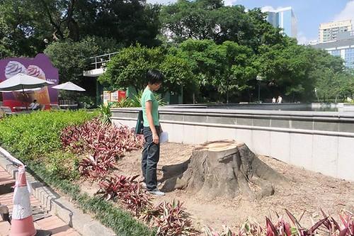 Tree (6)