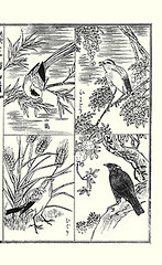 Top left – blue magpie; Top right – heavenly bamboo and brown-eared bulbul; Bottom left – barley and skylark; Bottom right – pomegranate and common hill myna
