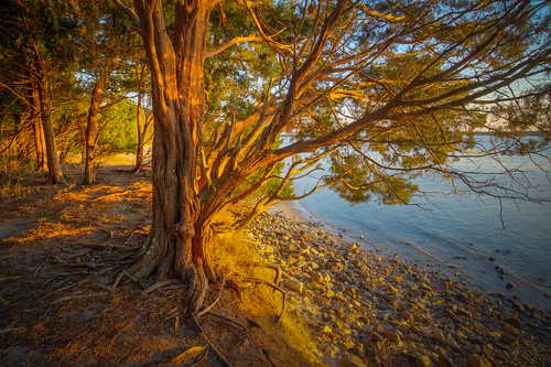 hdr trees roots ballaststones discarded ameliaisland fortclinchstatepark ameliarivercampground northflorida sunset fernandina landscape easternredcedar