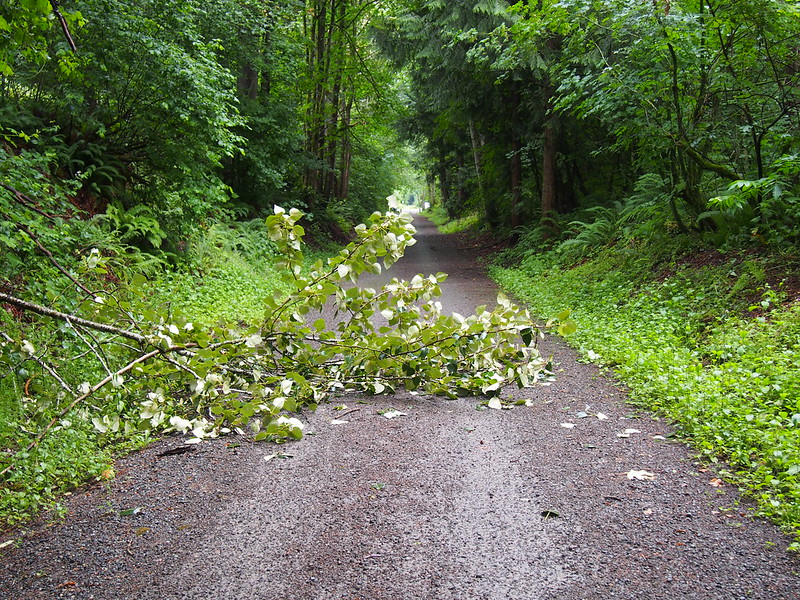 Snoqualmie Valley Trail: Fallen Tree: Can't go one ride out here without seeing at least one!