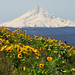 Mount Hood from Tom McCall Point by LiefPhotos