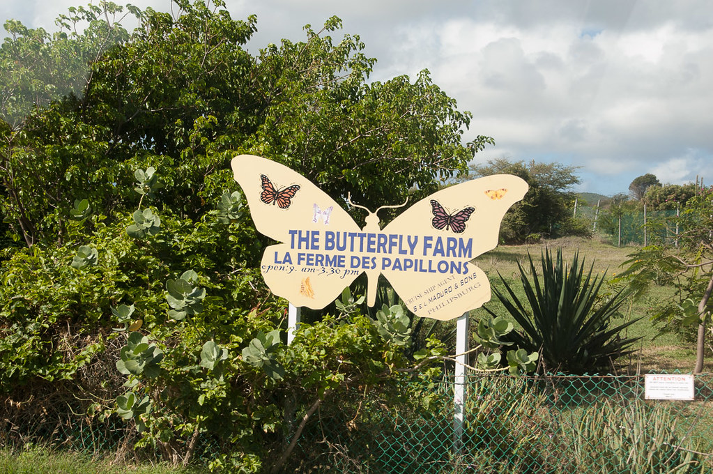 Butterfly Farm in St. Maarten