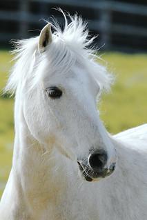 Shire Horse_ZEE4133_DxO-Kodakchrome