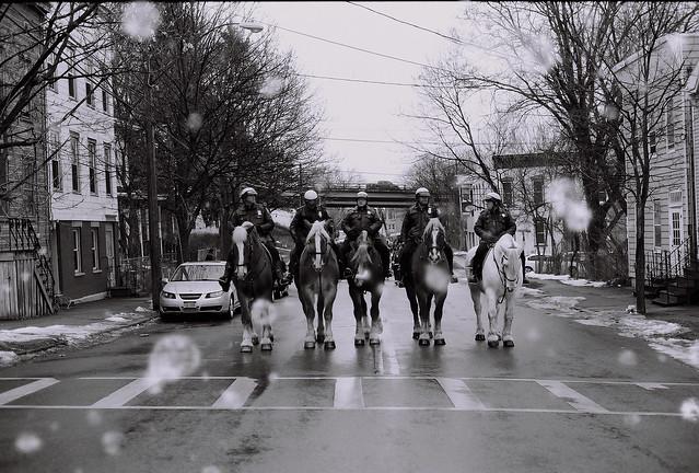 Horsemen at Limerick Parade, Albany, N.Y.