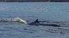 Blue Whale, Baja California, Mexico by bfryxell