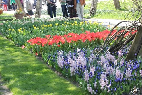 Tulipan im Britzer Garten 23.04.201535