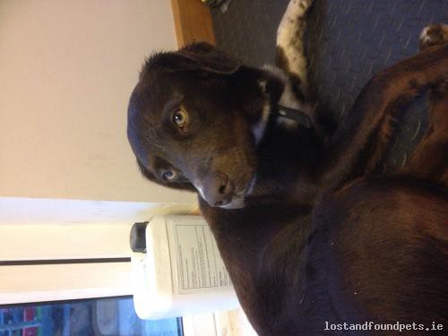 Sat, May 2nd, 2015 Found Male Dog - Ard Alainn, South Tipperary
