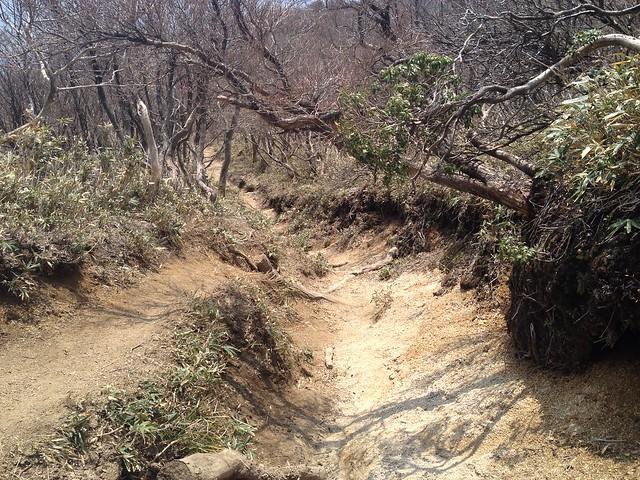 釈迦ヶ岳 県境稜線縦走路