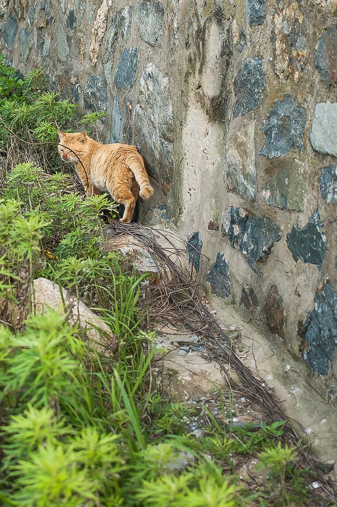 2015 0413 Cat of Dongju' Matsu 02