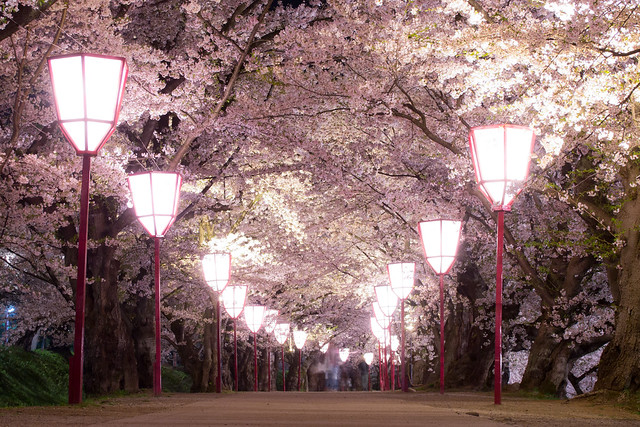 Hirosaki night 5