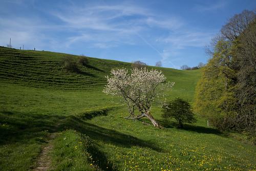 nature landscape schweiz switzerland europe suisse hiking 28mm rangefinder mp svizzera solothurn wanderung randonnée 2016 svizra escursione leicam 160506 elmaritm messsucher jurahöhenweg typ240 ©toniv m2404596 birenmatt staffelegghauensteinbalsthal