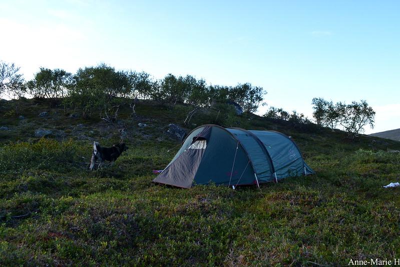 telttajakoira