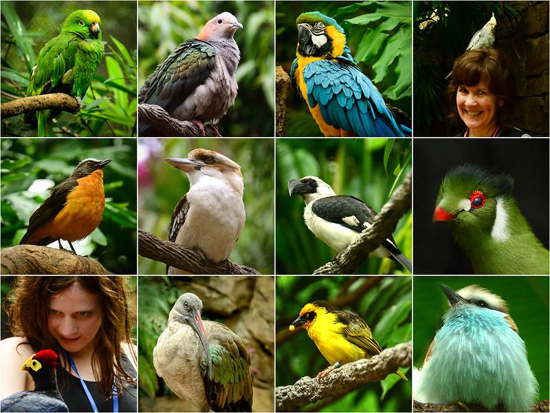 Bird 12 square