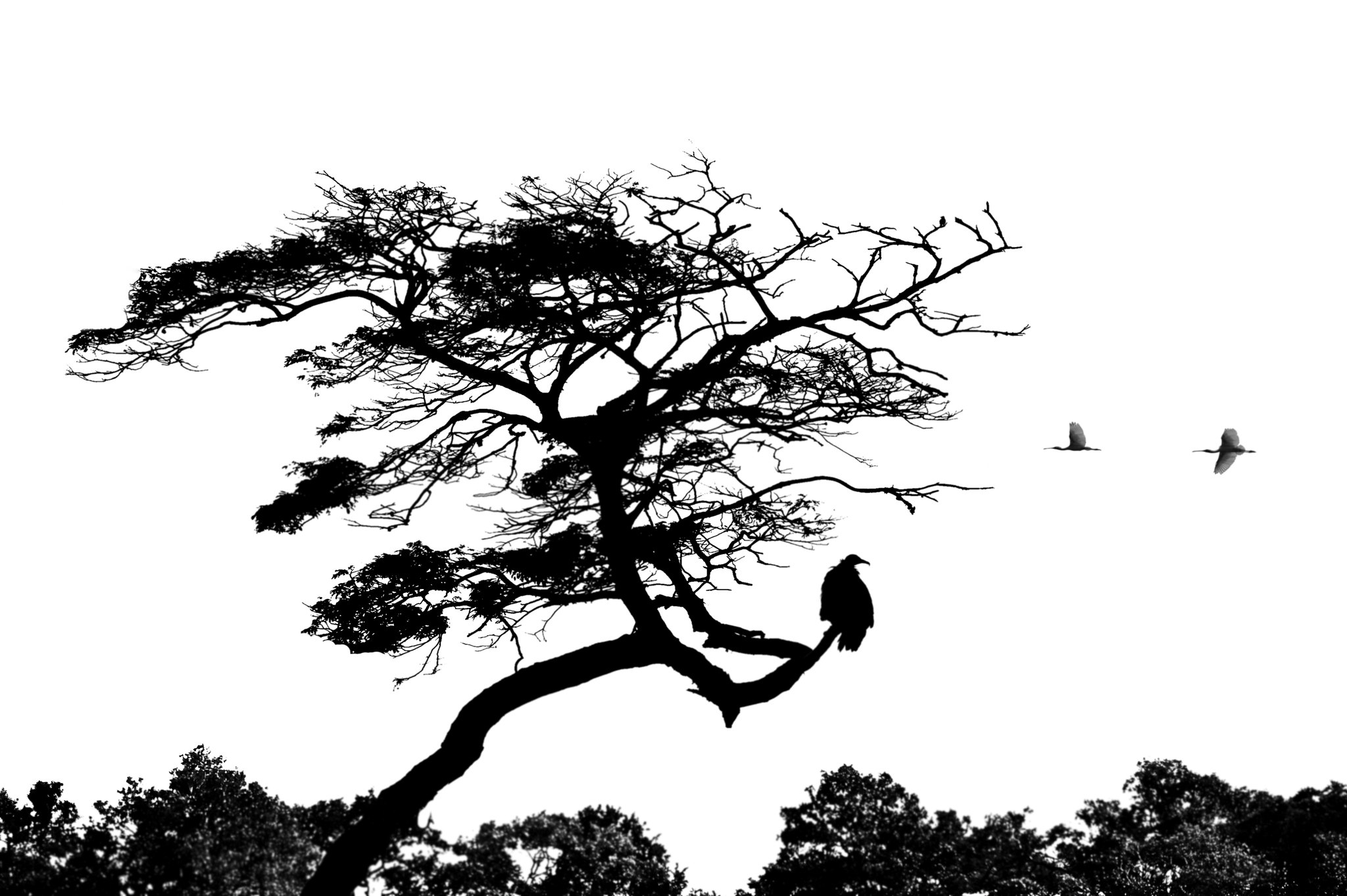 tree silhouette with birds | tree silhouette with birds ...