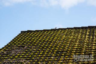 Moosbedecktes Dach