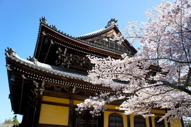 桜と法堂/南禅寺(Nanzen-ji Temple / Kyoto City) 2015/04/02