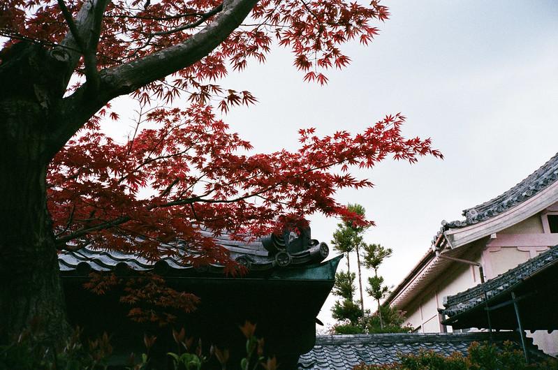 Kyoto - 仁和寺