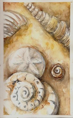Seashell Practice Study