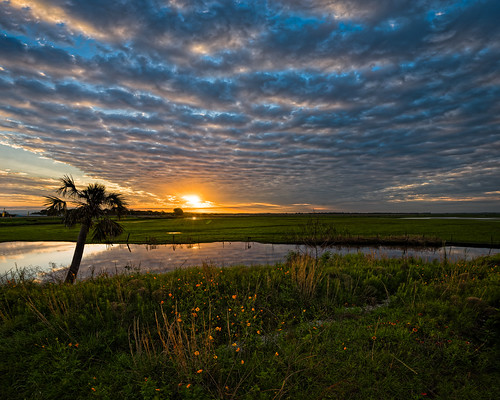 christmas sky panorama usa cloud plant flower reflection tree reed water grass weather sunrise river landscape dawn florida cloudy swamp marsh stjohnsriver centralflorida edrosack