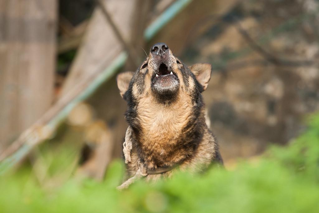 2015 0413 Dog of Dongju' Matsu 16