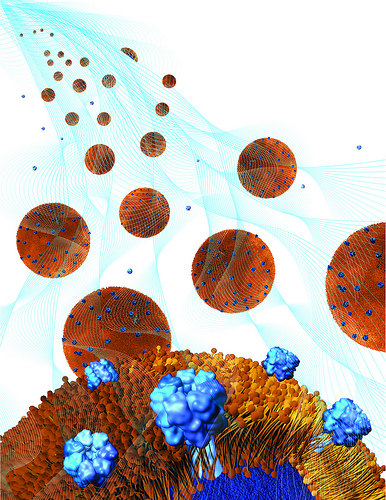 水凝膠的孔大小恰好可以鎖住奈米海綿,但讓毒素進入,和奈米海綿結合。(來源:Weiwei Gao/Jacobs School of Engineering/UC San Diego)