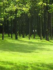 The stand of trees - Photo of Ménéac