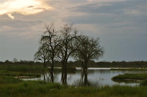 africa sunlight water landscape afternoon dusk peaceful delta safari oasis waterlilies botswana gamedrive okavangodelta greenseason