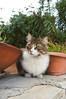 Cyprus cats