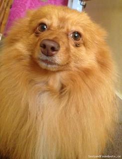 Thu, Apr 30th, 2015 Lost Female Dog - Clonsilla, Dublin 15