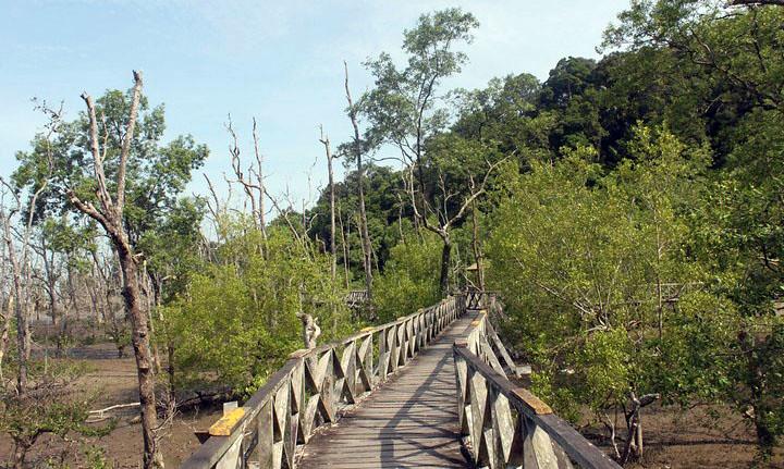 Bako National Park nær Kuching i Sarawak