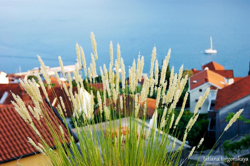Травы и крыши на заднем плане