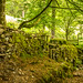Mossy Stonework by ian.emerson36