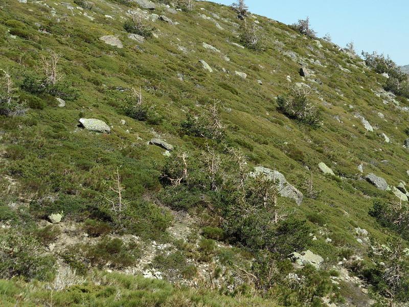 Peñalara. Alpino. Artrópodos, anfibios y reptiles 17122976813_1fecaa4b4e_c