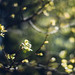 and finally spring... by rsc_escher/slowed by hard drive crash...