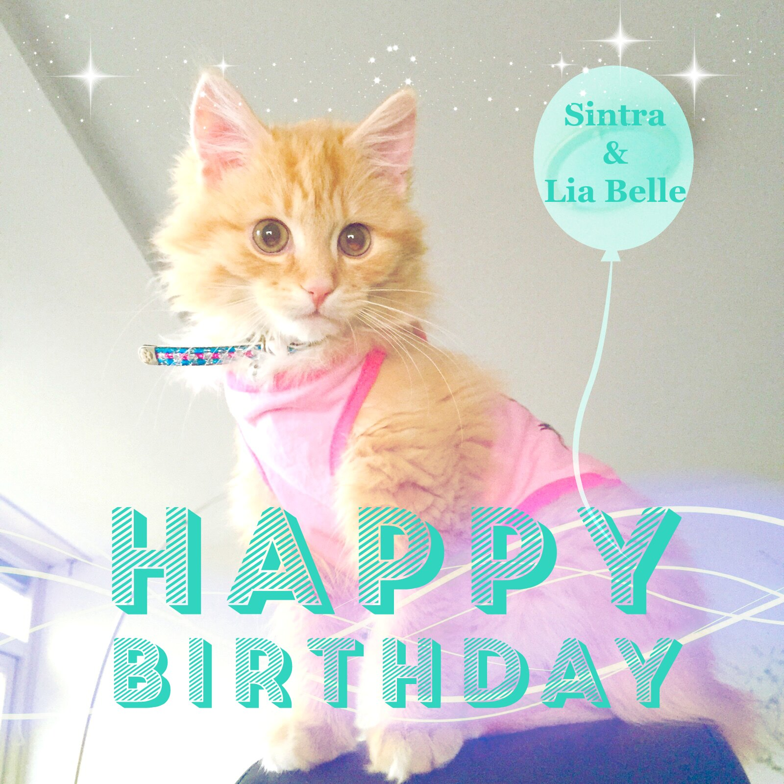 Wishing you a wonderful and happy birthday with hugs and kisses from Sintra The Cat and Lia Belle