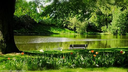 flowers nature river germany bench landscape deutschland wasser natur bank blumen romance fluss landschaft rheinland rhineland lahn koblenz rheinlandpfalz romantik romanticism rhinelandpalatinate flus