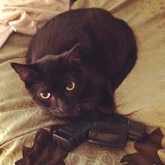 #thuglife #cat #glock