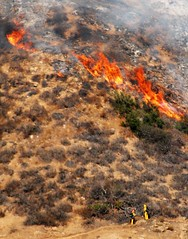 Fire Consumes 18 Acres in the Hollywood Hills