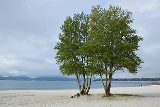 Bild av Praia do Vao O Vao Beach. españa beach mar playa galicia árbol nublado vigo canido ovao wikimediaespaña