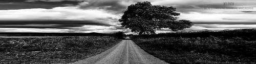 she blackandwhite tree clouds landscape scenery mood path atmosphere cumbria eden pike sheena edenvalley dufton duftonpike mypath sheenaduckworthphotography