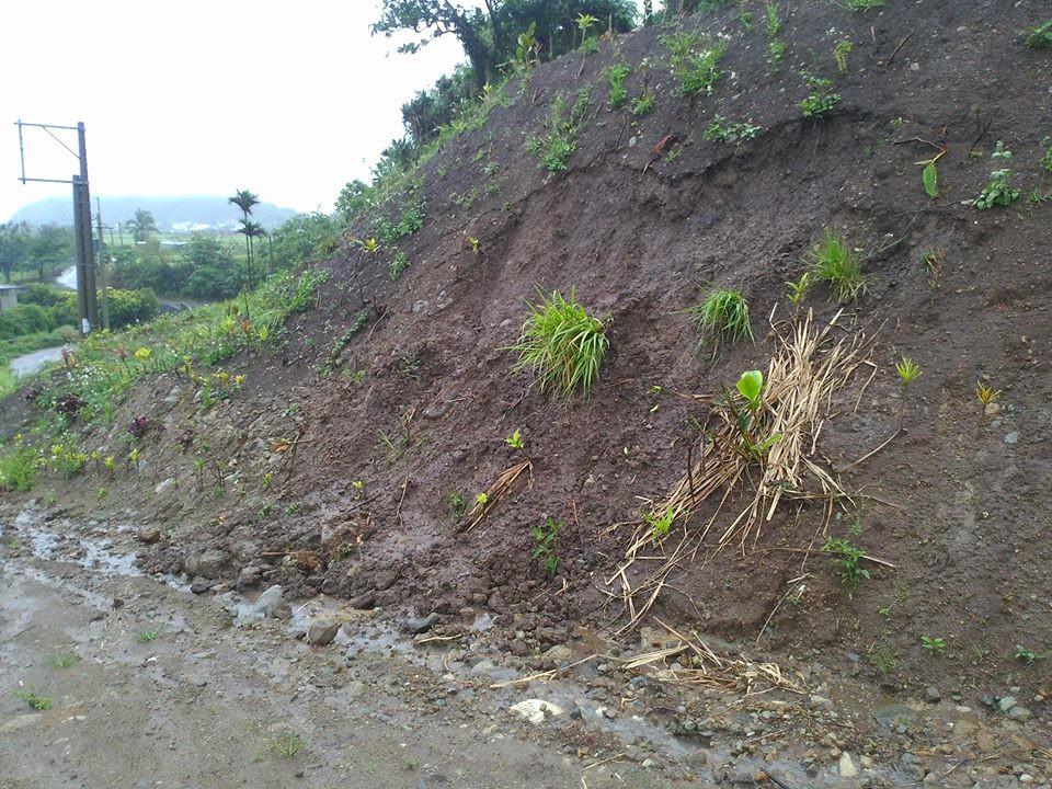 整形出來的陡坡,土已經開始掉下來